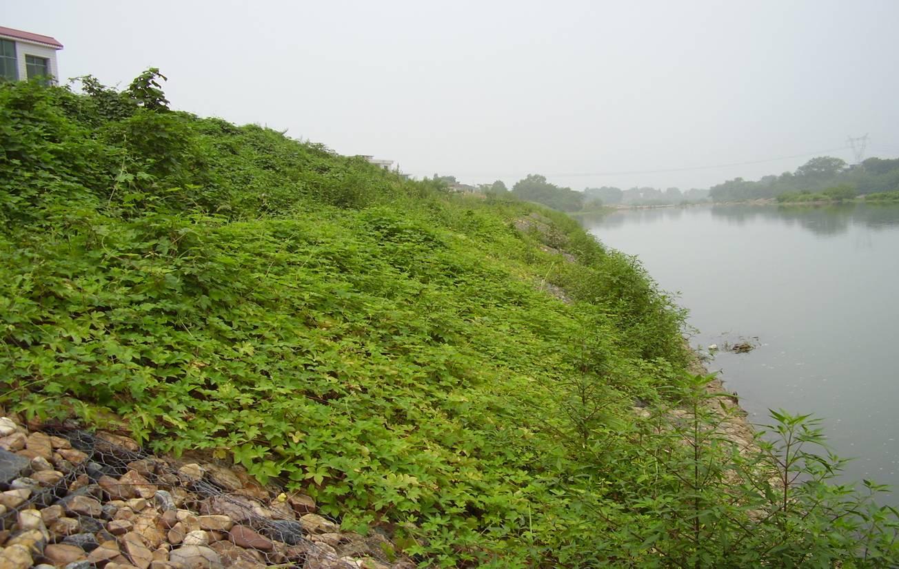 河道石笼网怎么防护?